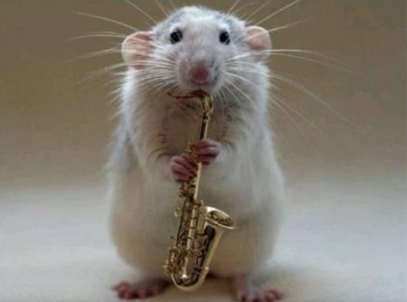 rat jazz